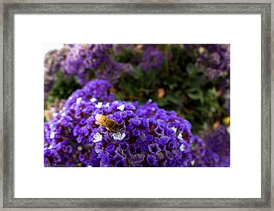 Framed Print featuring the photograph Just A Quick Stop by Lora Lee Chapman