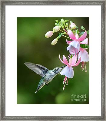 Just A Sip Framed Print