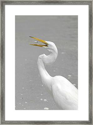 Just A Snack Framed Print by Keith Lovejoy