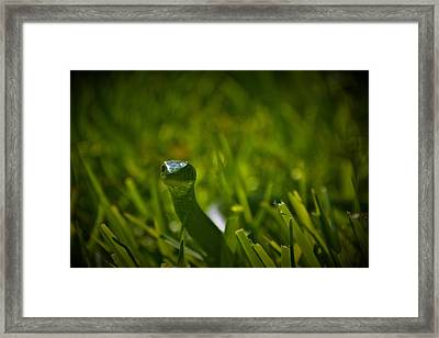 Just A Snake In The Grass Framed Print