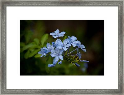Framed Print featuring the photograph Just A Touch Of Blue by Monte Stevens