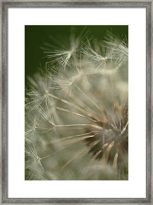 Just A Weed Framed Print