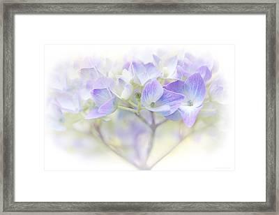 Just A Whisper Hydrangea Flower Framed Print by Jennie Marie Schell