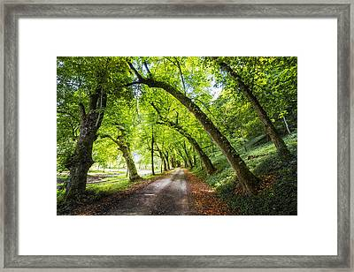 Just Around The Bend Framed Print