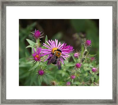 Just Beeing  Debbie-may Framed Print by Debbie May