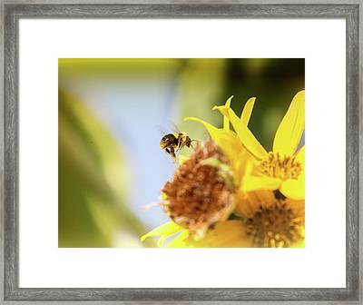 Framed Print featuring the photograph Just Beeing Me by Annette Hugen