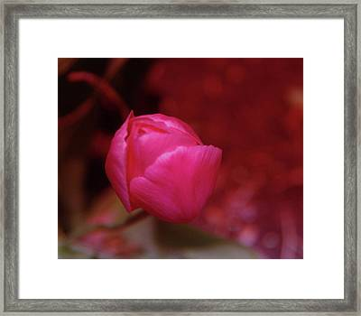 Just Before The Bloom  Framed Print by Jeff Swan