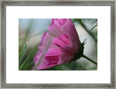 Just Breezing Through Framed Print by Connie Handscomb