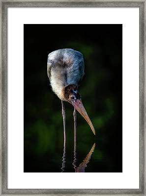 Just Browsing Framed Print