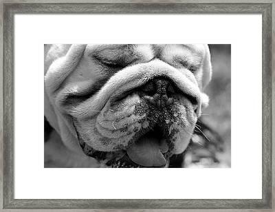 Lovable  Framed Print