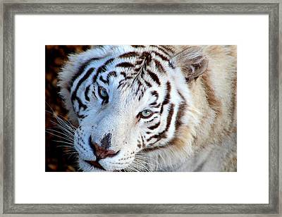 Just Call Me Gorgeous Framed Print by Fiona Kennard