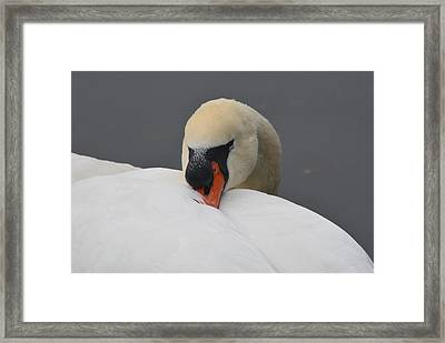 Just Checking My Eyelids Framed Print by Richard Andrews