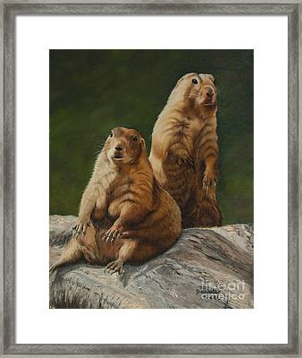 Just Chillin - Prairie Dogs Framed Print