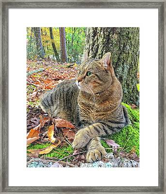 Just Chillin' In The Woods Framed Print by Susan Leggett