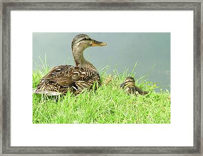 Just Chillin' Out Framed Print by Martina Fagan