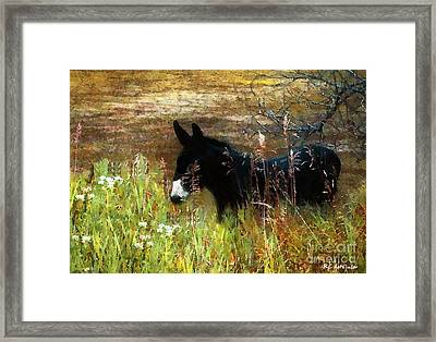 Just Chillin' Framed Print by RC DeWinter