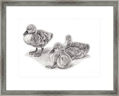 Just Chilling Framed Print