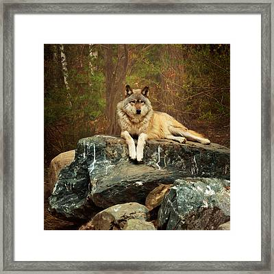 Framed Print featuring the photograph Just Chilling by Susan Rissi Tregoning