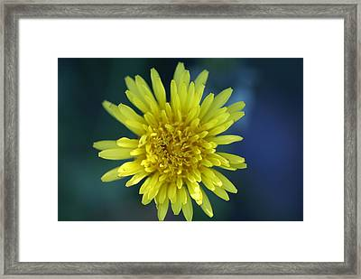 Just Dandy Framed Print by Patricia M Shanahan
