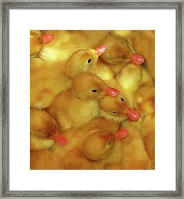 Just Ducky Framed Print by Peg Urban