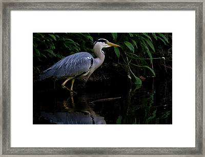 Just Fishing Framed Print