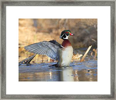 Framed Print featuring the photograph Just Flappin' Around by Gerry Sibell