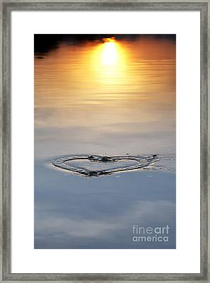 Just For Love Framed Print by Tim Gainey
