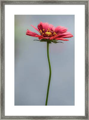 Just For You Framed Print