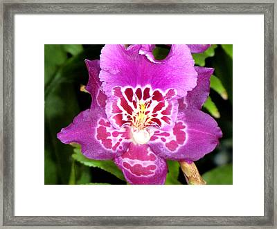 Just For You Framed Print by Mindy Newman