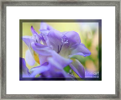 Framed Print featuring the photograph Just Freesia's by Lance Sheridan-Peel