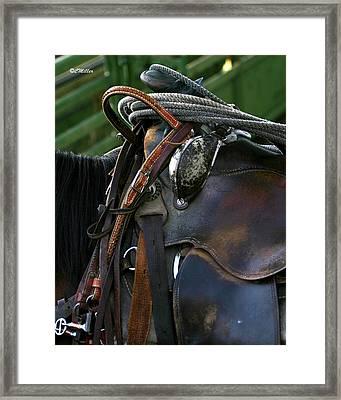 Just Gettin Broke In.. Framed Print by Carol Miller