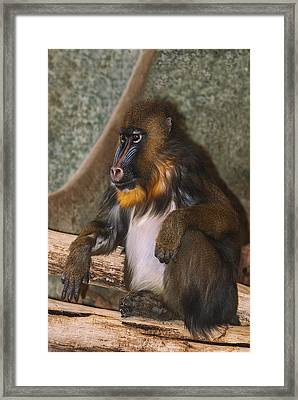 Just Giving Thought As To What If Framed Print by Jack Zulli