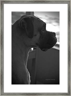 Just Handsome Framed Print by DigiArt Diaries by Vicky B Fuller