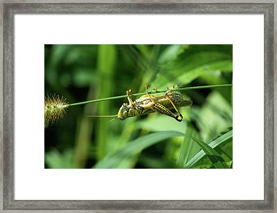 Just Hangin Around Framed Print