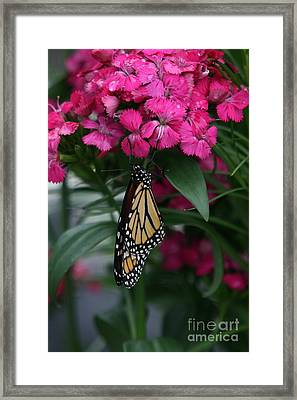 Just Hangin' Out Framed Print by Crystal Nederman