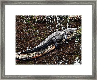 Just Hanging Out Framed Print