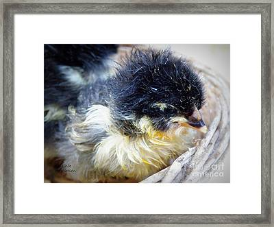 Just Hatched Framed Print by Lainie Wrightson
