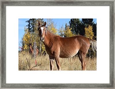 Horse Cr 511 Divide Co Framed Print