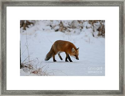 Just Hunting For Breakfast Framed Print