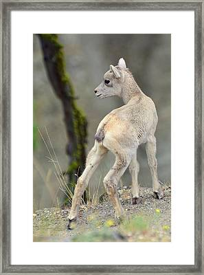 Framed Print featuring the photograph Just Kidding Around by Bruce Gourley