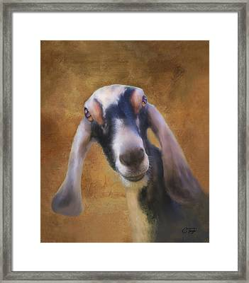 Just Kidding Around Framed Print