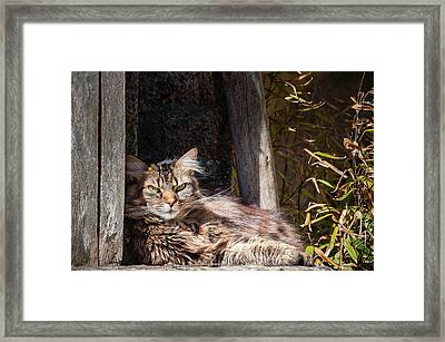 Just Lazing Around Framed Print