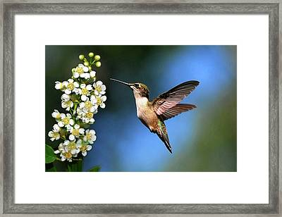 Just Looking Framed Print by Christina Rollo