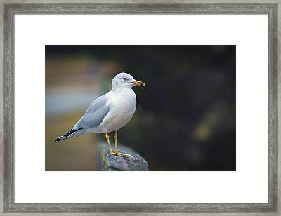 Framed Print featuring the photograph Looking Forward by Cindy Lark Hartman