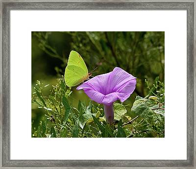 Just Looking Framed Print