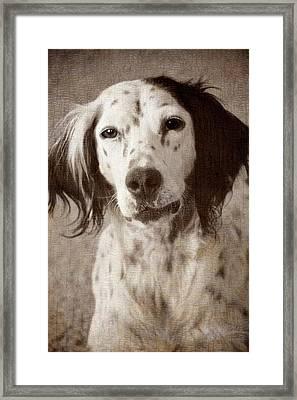 Just Love Me Framed Print by Flying Z Photography By Zayne Diamond