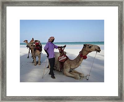Just Married Camels Kenya Beach 2 Framed Print
