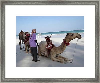 Just Married Camels Kenya Beach Framed Print