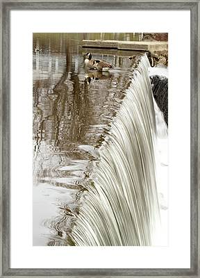 Just On The Edge Framed Print by Karol Livote