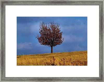 Just One Framed Print by Karen Scovill